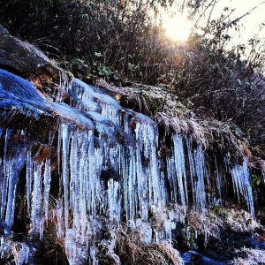 photo of icicles at craggy gardens