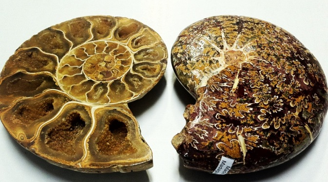 She Said: The Metaphysical Properties of Ammonites