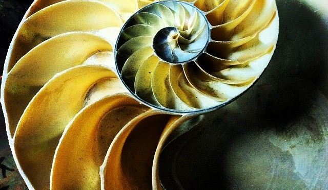 Everyday Sacred Geometry: Nautilus Spiral