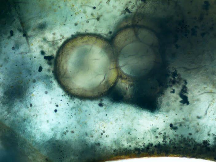 Ocean Jasper Orbs